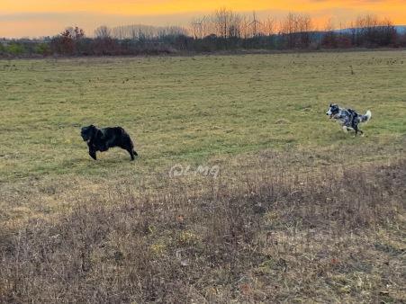 (Oma) Onyx wird im März 10. Hinterher sprintet (Enkelchen) Famy (9 Monate)