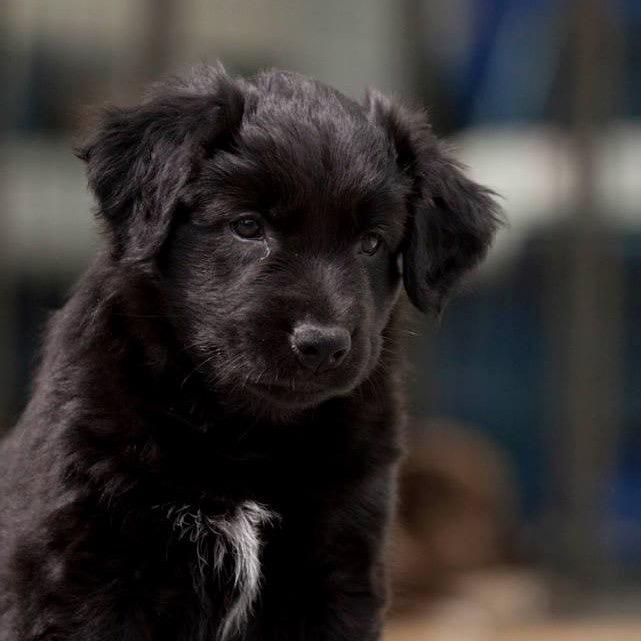 Little Black Dog